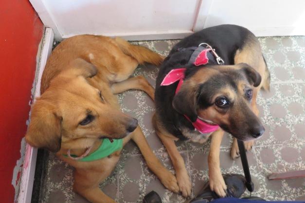 Mostrando modales caninos a Nena, que nunca antes había pisado un local de internet en su pueblo, Santa Rosa de Viterbo