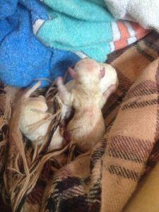 Tres de los hermanos: parecen ratones pero no tienen la cola tan larga