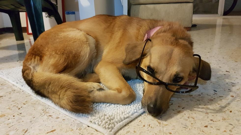 linda-intelectual